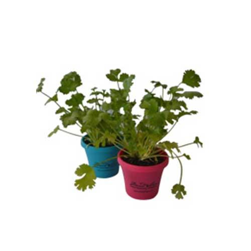 Herb Pot Mini 7,5cm